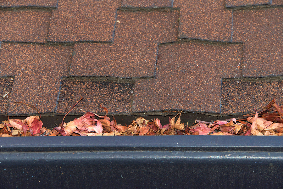 Gutters on shingle roof without gutter guards clogged with leaves from trees. Increased risk of clogged gutters rusting increased need for maintenance and is a potential fire hazard. Gutter guard installation in Berkeley CA | Residential & Commercial Insulation near me